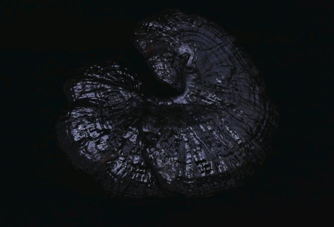 black-gooddarkness-4